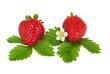 Erdbeere mit Hand erstelltem exaktem Beschneidungspfad