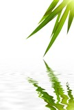 Zen bamboo with sun and reflection in the water