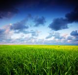 Summer landscape. Green grass and blue sky