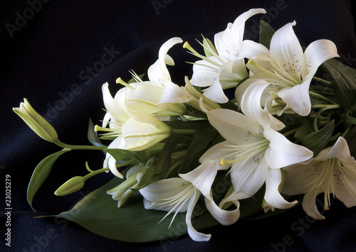 canvas print picture Easter Lily