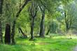 alberi 462