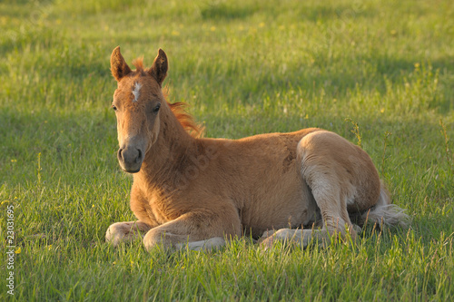 Colt on meadow
