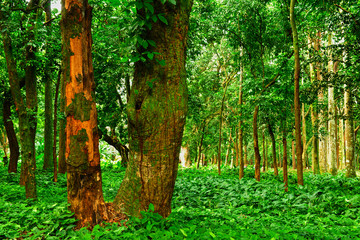 beautiful dense forest with flowers