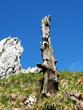 Alpi Apuane - Tacca Bianca