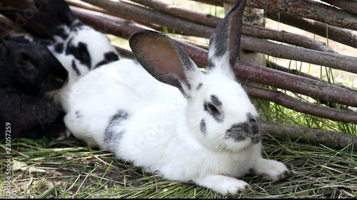 Rabbits have a rest near a fence