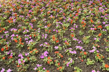 primi fiori di primavera