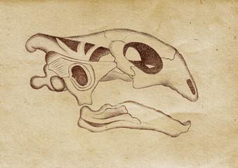 Tortoise's Skull Illustration (from late 1800)