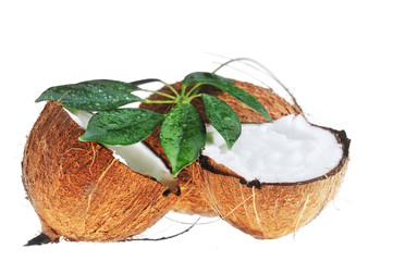 coconut and leaves