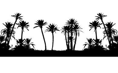 palm tree marrakech rempart