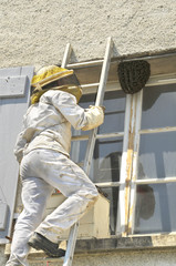 L'apiculteur et l'essaim