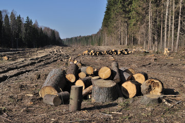 Deforested area with log's piles