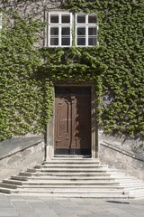 entry in the house and ivy