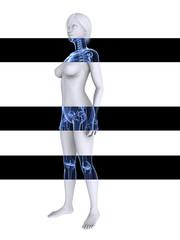 3d Modell  - Frau