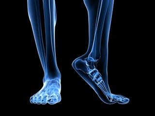 menschliches Fußskelett