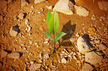 new life - fresh plant in desert