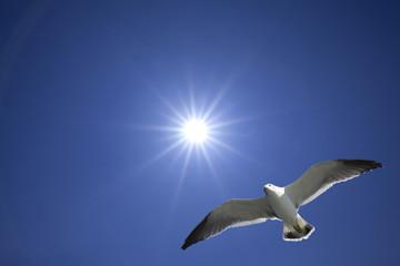 太陽にカモメが飛ぶ