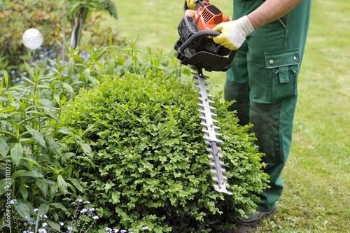 Mann trimmt einen Buchsbaum