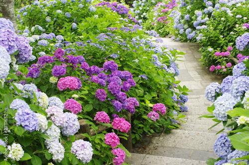 Tuinposter Hydrangea hydrangea