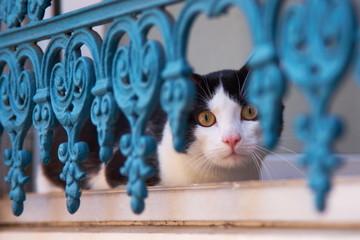 Katze hinter Gitter