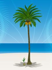 Pretty coconut tree