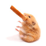 hamster with bread - Fine Art prints