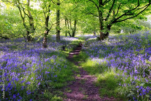 canvas print picture Blue bells forest