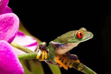 Tree frog 02