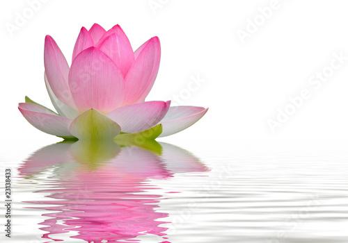 Fotobehang Lotusbloem reflet fleur de lotus