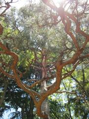 20100531_日本庭園