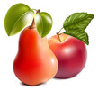 Photo-realistic vector. Ripe red apple and pear.