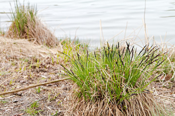 grass on the lake side.