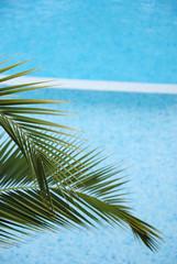 Piscine et palmier; 2010