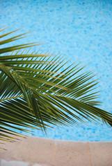 Piscine et palmier, 2010