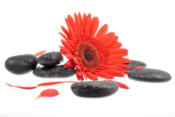 red flower black stones and drops