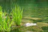 Fototapety Wellness Stimmung am See - At the Lake