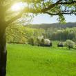 green meadow with sun beam