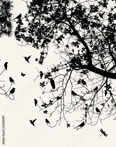 Keuken foto achterwand Vogels op boom tree