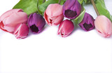 Pink and purple tulips isolated on white