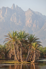 Socotra mountains and palm trees grove