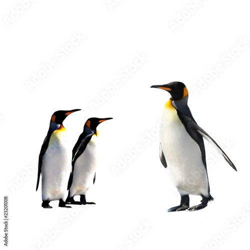 Foto op Canvas Pinguin Penguins