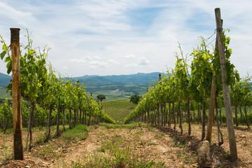 vigneti in Toscana - Italia