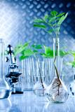 Genetic modify seedling poster