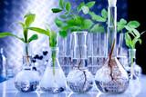Fototapeta roślina - próba - Roślinne