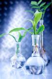 Test on seedlings poster