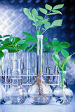 Seedlings in test tubes in lab poster