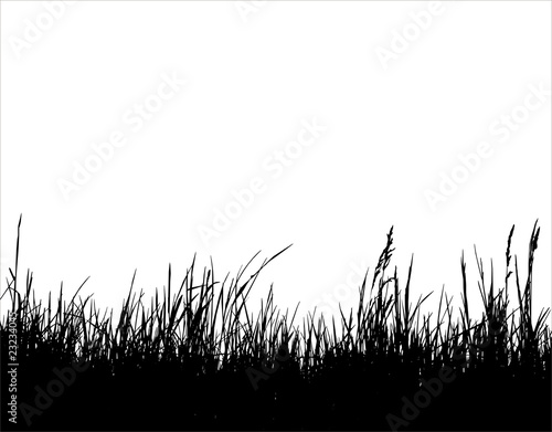 Gras-02 - sw