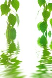 Green leaves in water