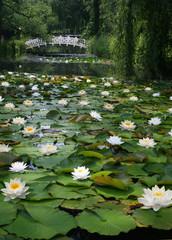 Im Wassergarten von Claude Monet