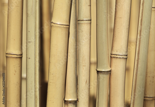 Bamboo background texture - 23246655