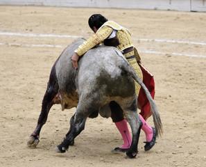 Matador Hugging Bull